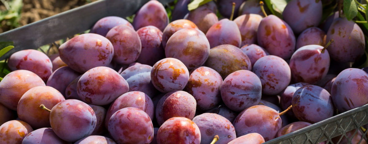 fresh-plums-2560x1016-c-default